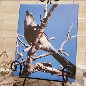 Bluebird Canvas Wrap Photo Print